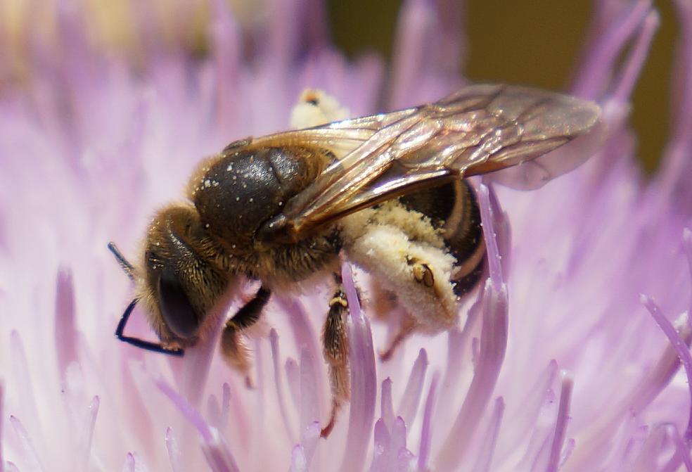 abeja con filtro photoshop CC