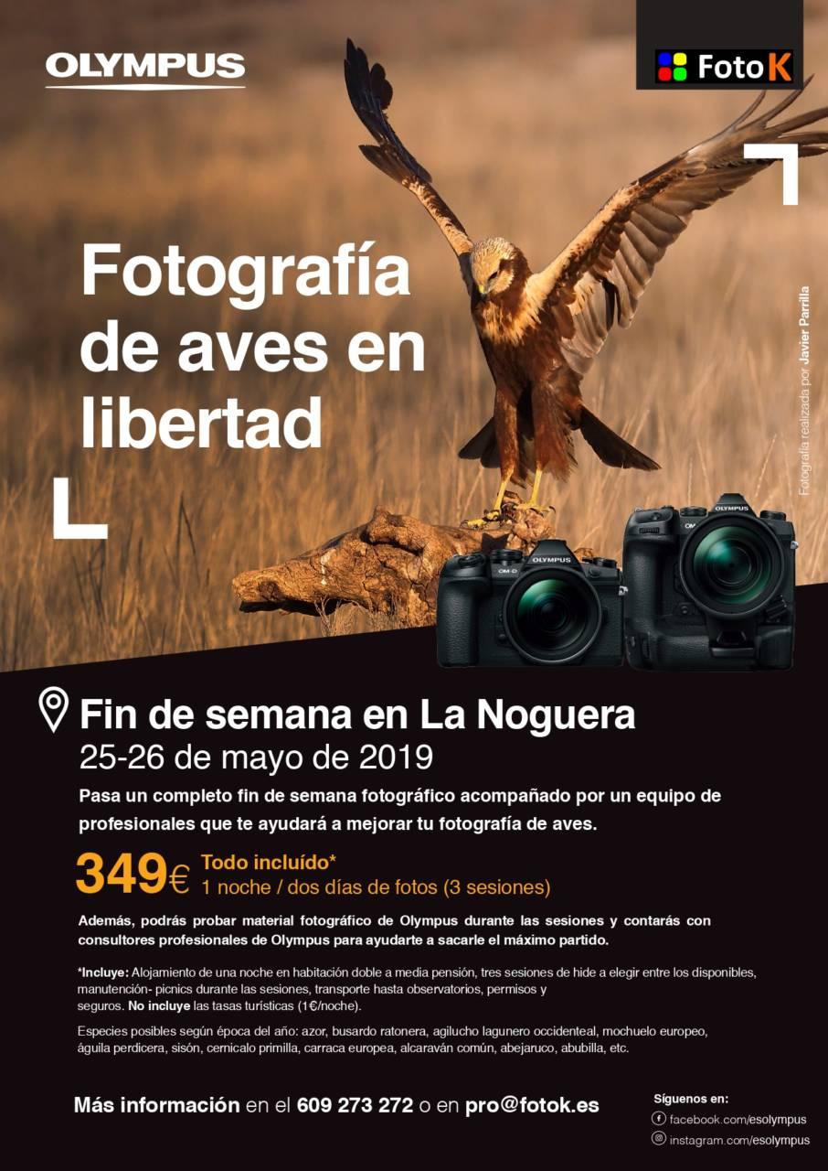 actividad fotografiar aves con Foto K y Olympus
