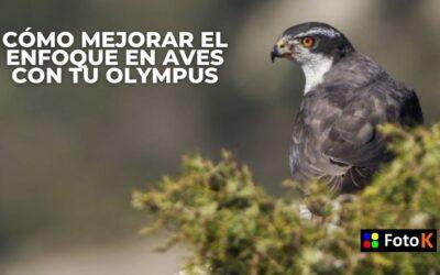 Cómo mejorar el enfoque en aves con Olympus
