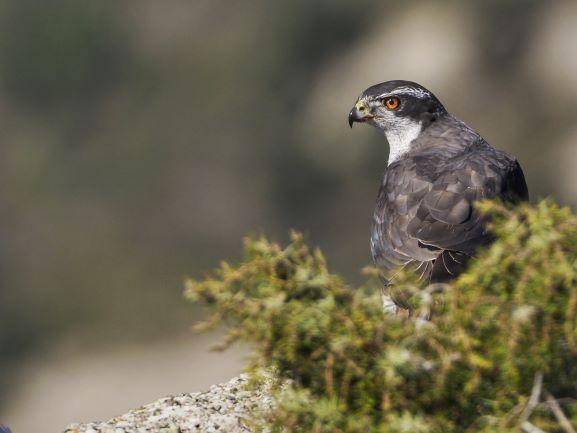 como enfocar aves con Olympus en Foto K