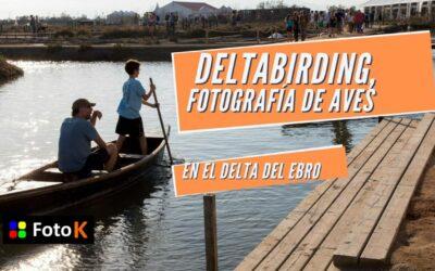 Deltabirding, fotografíar aves en el Delta del Ebro